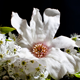 Flower Wilting Time Lapse II - VideoHive Item for Sale