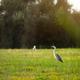 Grey heron - PhotoDune Item for Sale