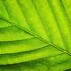 Leaf macro - PhotoDune Item for Sale