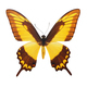 Isolated butterfly - PhotoDune Item for Sale