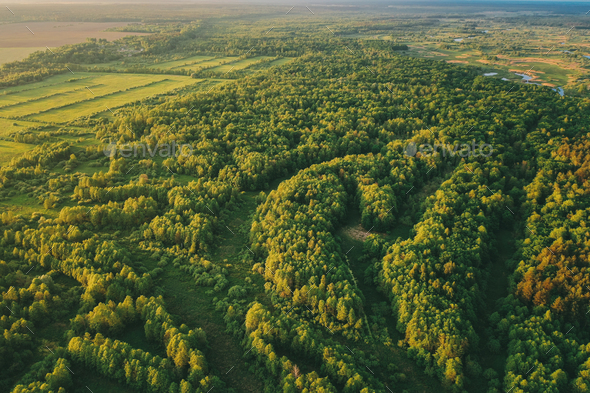 Aerial View Green Forest Woods Landscape In Sunny Spring Evening - Stock Photo - Images