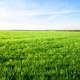 Field with green grass - PhotoDune Item for Sale
