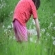Girl And Dandelions 4 - VideoHive Item for Sale