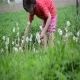 Girl And Dandelions 5 - VideoHive Item for Sale