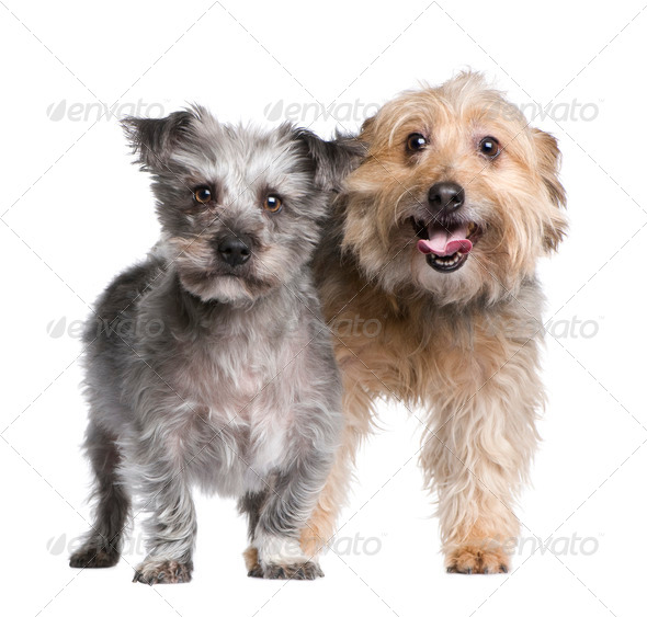 two Bastard - Stock Photo - Images