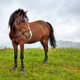 Horse on the meadow in the mountains. Foggy morning pasture - PhotoDune Item for Sale