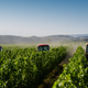 red tractors working in the vineyard - PhotoDune Item for Sale