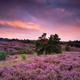 big rainbow over purple heather flower hills at sunset - PhotoDune Item for Sale