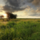golden sunset sunlight over meadow and tree - PhotoDune Item for Sale