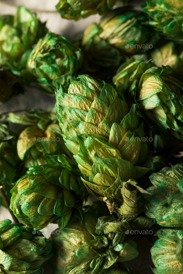 Raw Green Organic Fresh Beer Hops - Stock Photo - Images