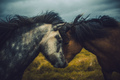 Two beautiful Icelandic horses bonding - PhotoDune Item for Sale