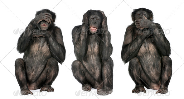Three Wise Monkeys : Chimpanzee - Simia troglodytes (20 years old) - Stock Photo - Images