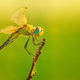 Dragonfly with green background - PhotoDune Item for Sale