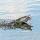 Northern pike splasing in water - PhotoDune Item for Sale
