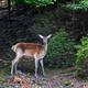 Deer on meadow in summer time - PhotoDune Item for Sale