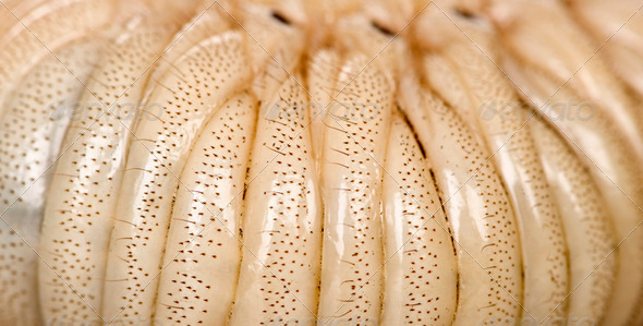 Close-up of Larva of a Hercules beetle, Dynastes hercules - Stock Photo - Images