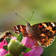 Pollinators at work - PhotoDune Item for Sale