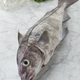Fresh raw whole haddock fish - PhotoDune Item for Sale