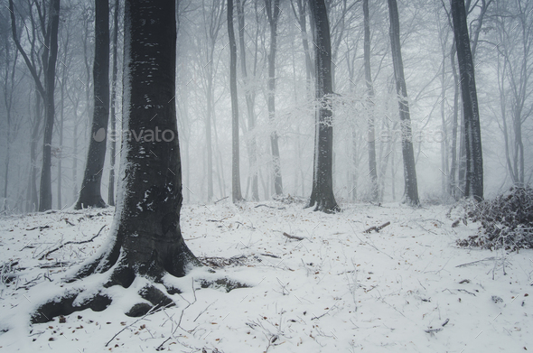 snow in winter forest fantasy landscape background - Stock Photo - Images