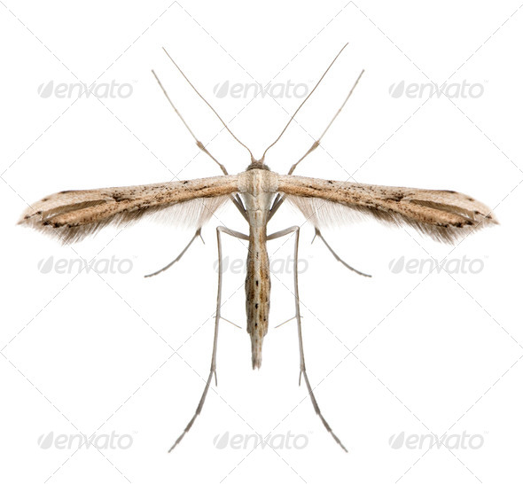 High angle view of moth, Lepidoptera, in front of white background, studio shot - Stock Photo - Images