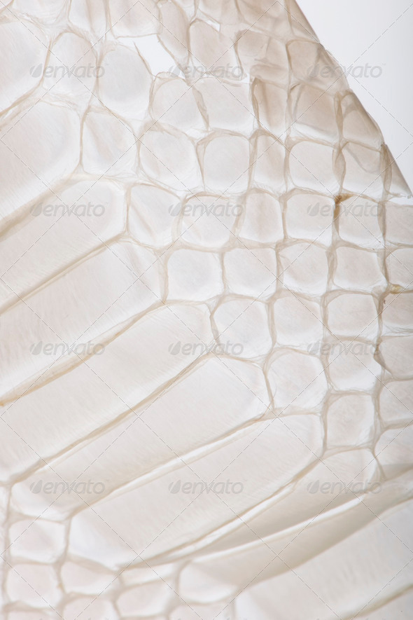 Close-up of squamata, scaled reptile - Stock Photo - Images