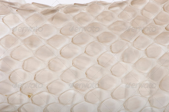 Close-up of squamata, scaled reptile against white background, studio shot - Stock Photo - Images