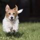 Active playful dog - PhotoDune Item for Sale