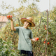 Boy in organic garden holding tomatoes - PhotoDune Item for Sale