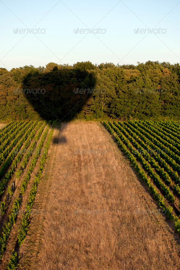 Shadow of a hot air balloon over field - Stock Photo - Images