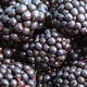 many ripe fresh blackberries close up - PhotoDune Item for Sale