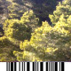 Mediterranean Forest - Aerial Views - VideoHive Item for Sale