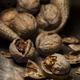 Cracked walnuts - PhotoDune Item for Sale