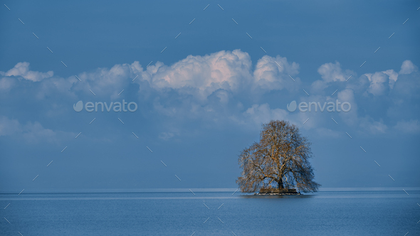 Big isolated tree on a cloudy sunny blue sky - Stock Photo - Images