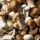 Raw Organic Gourmet Mushroom Assortment - PhotoDune Item for Sale