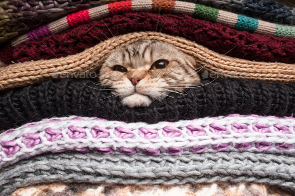 Angry cat is preparing for winter - Stock Photo - Images