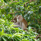 Macaque monkeys in the forest. - PhotoDune Item for Sale