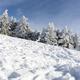 Snowed pine treer in ski resort of Sierra Nevada - PhotoDune Item for Sale