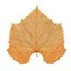 Brown Vine leaf isolated - PhotoDune Item for Sale