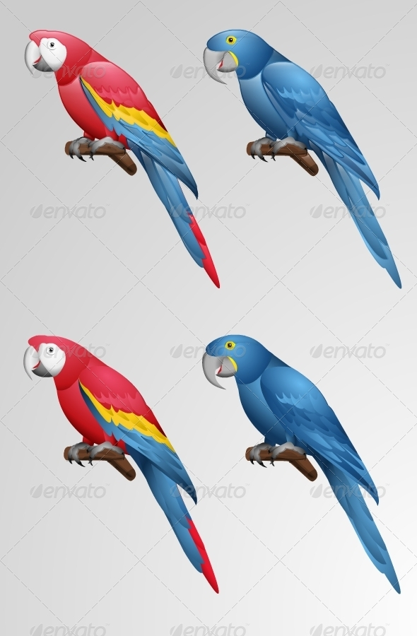 Parrot Vector - Animals Characters
