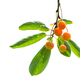 Cherries on leaves - PhotoDune Item for Sale