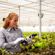 Working woman taps something on a tablet near a salad plantation - PhotoDune Item for Sale