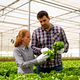 Two researchers analyze salad plants in a modern greenhouse - PhotoDune Item for Sale