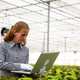 Researcher woman notices something in laptop while sitting next to a salad plantation - PhotoDune Item for Sale