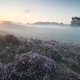 misty sunrise over pink heather flowers on hills - PhotoDune Item for Sale