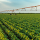 Irrigation sprinklers in young soybean field - PhotoDune Item for Sale