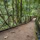 Los Tilos Rain Forest Water Canal, La Palma - PhotoDune Item for Sale