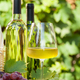 Colorful grapes and white wine - PhotoDune Item for Sale