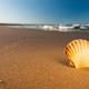 Beach Sunset - PhotoDune Item for Sale