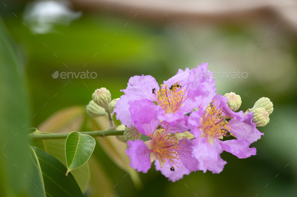 Pink flower on a branch. - Stock Photo - Images