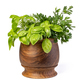 Fresh spices and herbs in mortar - PhotoDune Item for Sale